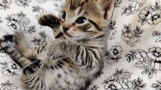 Kittens 2021-02-10