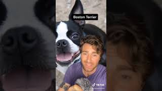 Funny Tiktok Compilation  what your dog breed says about you  pt 1  14  @EsperBorzoi