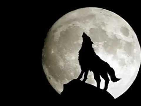 auman serigala ggs