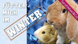 Winterfütterung - Was fressen Kaninchen & Meerschweinchen im Winter?