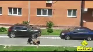 Две бойцовские собаки без намордников покусали бабушку с таксой на руках во Владивостоке.