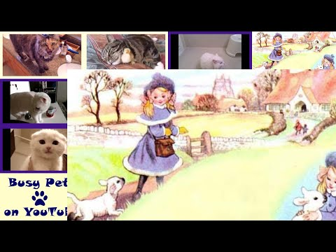 Cats Meowing MARY HAD A LITTLE LAMB, Classic Kid's Song (A Cappella)
