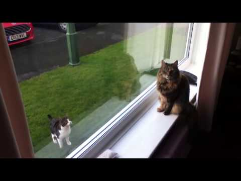Window Cat Attack. Watch What Happens Next.