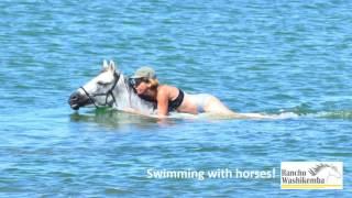 Swimming horses! - Rancho Washikemba horse ranch Bonaire