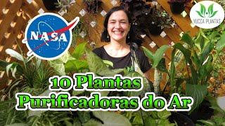 10 Plantas Purificadoras Do Ar – Estudo Da NASA