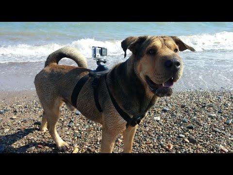 Playas para perros | ARISTOPET visita La Playa Can en Gandía - Valencia from YouTube · Duration:  1 minutes 35 seconds