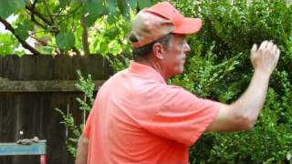 Gardening Tips : How to Trim a Shrub