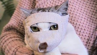 猫咪抵抗剪指甲,女主人背上抓了十几厘米伤痕,当初为何要养猫?