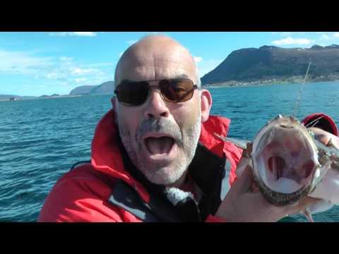 Vissen in Noorwegen Vanylven Hakallestranda