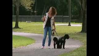 MiMascota | Cómo pasear a tu perro