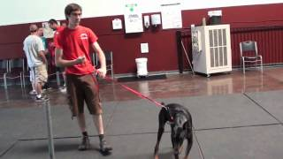 Aggressive Dog Behavior (episode 1)