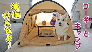 犬用ランタンをゲットして可愛いらしいテントグッズが揃いました!