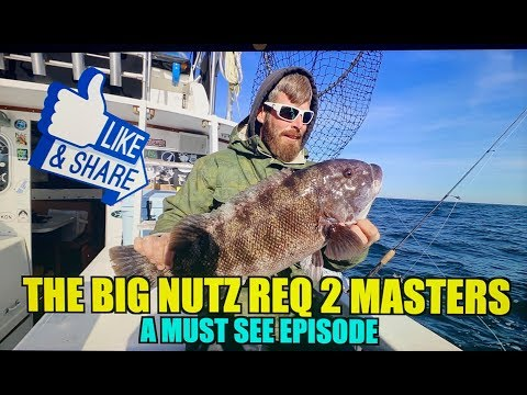 BLACKFISH TAUTOG MONSTERS CAUGHT ON VIDEO !! WITH BIG NUTZ REQ 2