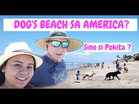 Pet Friendly Beach In California   Huntington Beach   Filam Couple