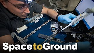Space to Ground: Studying DNA Breaks: 09/11/2020