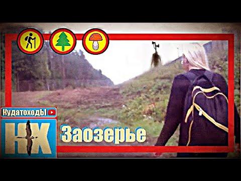 Заозерье 2019, Кадуйский район, Вологодская область, ищем грибы.