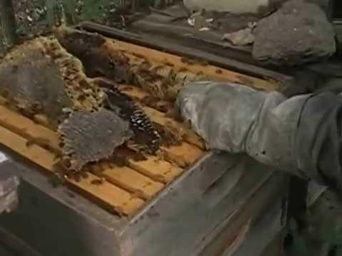 raw honey for zelko bistro