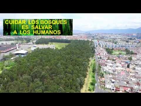 EL BOSQUE DE LA FABRICA DE BAVARIA  Bogotá