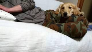 ルルのかまって作戦は1:30頃成功します。 勉強中の飼い主でしたが、試験...