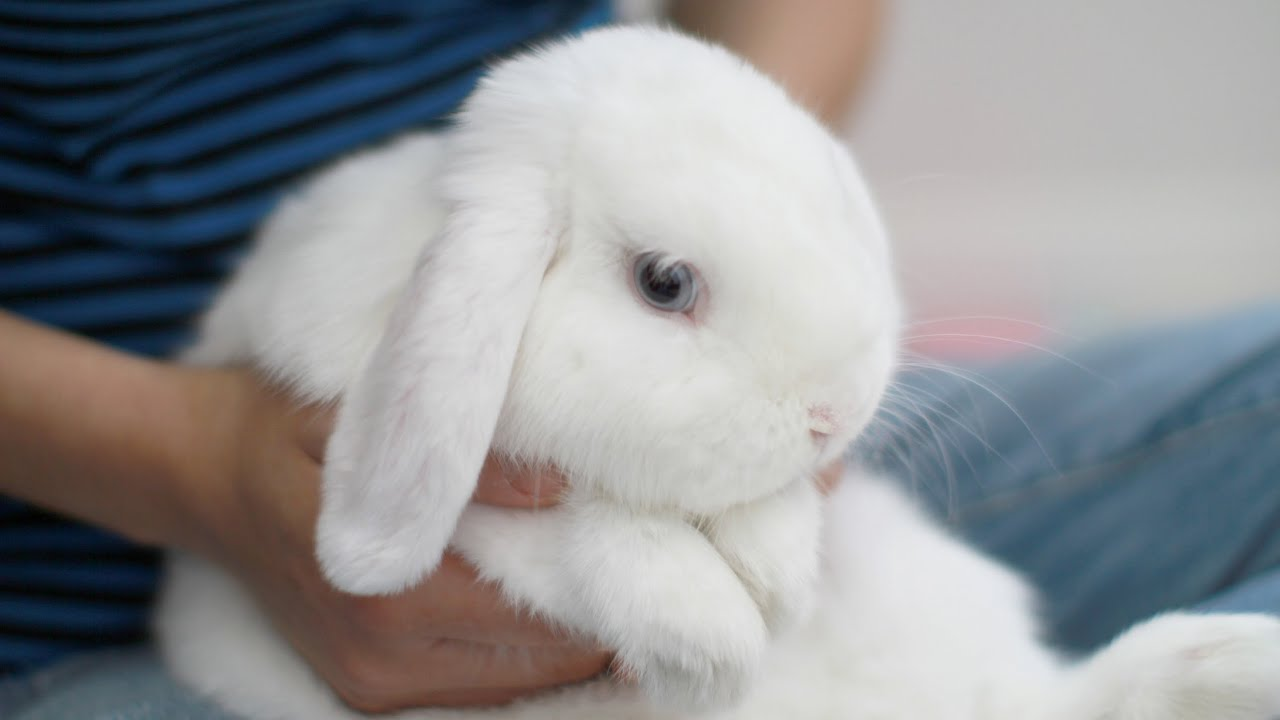 Cute Baby Pets Live Wallpaper Download The Cutest Bunny Ever Youtube