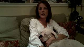 Lone Star Boxer Rescue - Welcome!