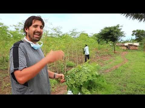 PRICELESS FARMS: Moringa Fields Walk-About - Oct-2019