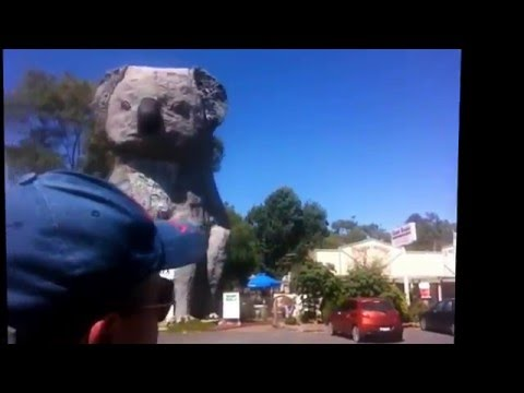 Paul Milsom visiting the giant koala on the way back from Adelaide