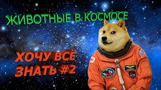 ТОП животных в космосе. Хочу всё знать #2
