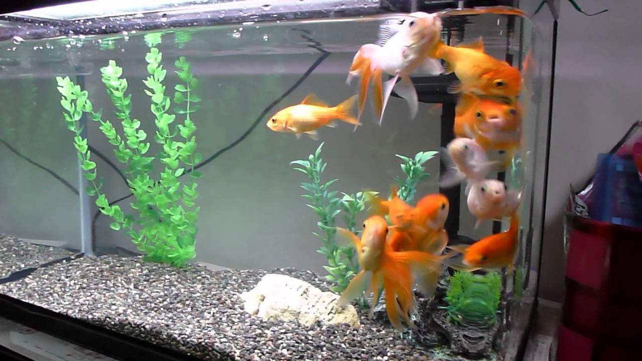 金魚水槽リフレッシュ