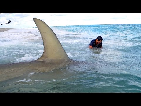 Monster Sharks caught Fishing from the Beach - 4K