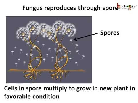 Science - Plants - Asexual Reproduction - English