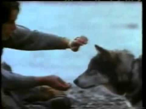 White Fang is listed (or ranked) 31 on the list The Greatest Dog Movies of All Time