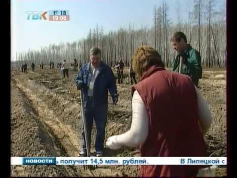 В Липецкой области лесники посадили дубовую аллею