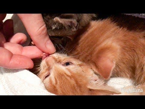 Surprise Ferocious Feral Kittens! TinyKittens.com