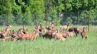 Работа и обучение оленеводов в охотхозяйстве Днепр-Холм.