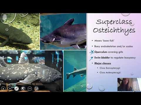 Fish (Osteichthyes)