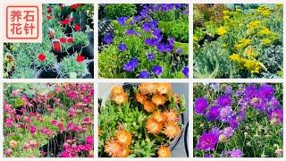 专业花店卖的几种花园地被植物 Ground Cover - 哪一种适合你?
