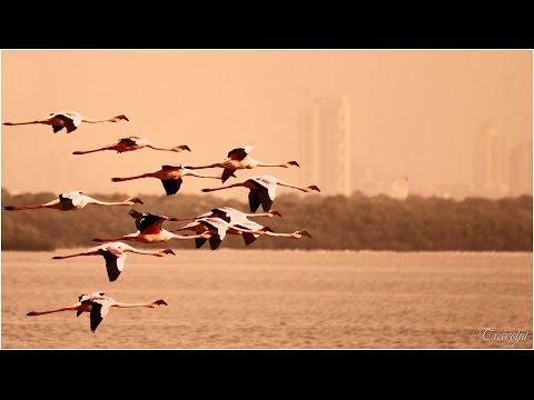 Mumbai's best kept secret - Flamingo Sanctuary at Thane Creek