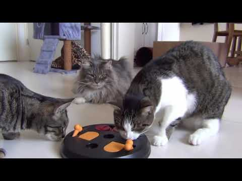 We are smart cats! - Cat Stories - Episode 6