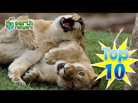 Top Ten Animals Playing Games