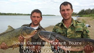 Ловля Сазана Дикого Карпа на нижней Волге дикий Нижневолжский Карпфишинг Carpfishing Рыбалка