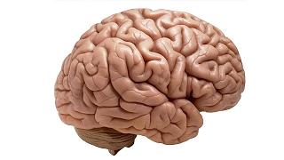 Как улучшить свой мозг?! Тайны Человеческого Мозга - документальный фильм! (09.02.2017)