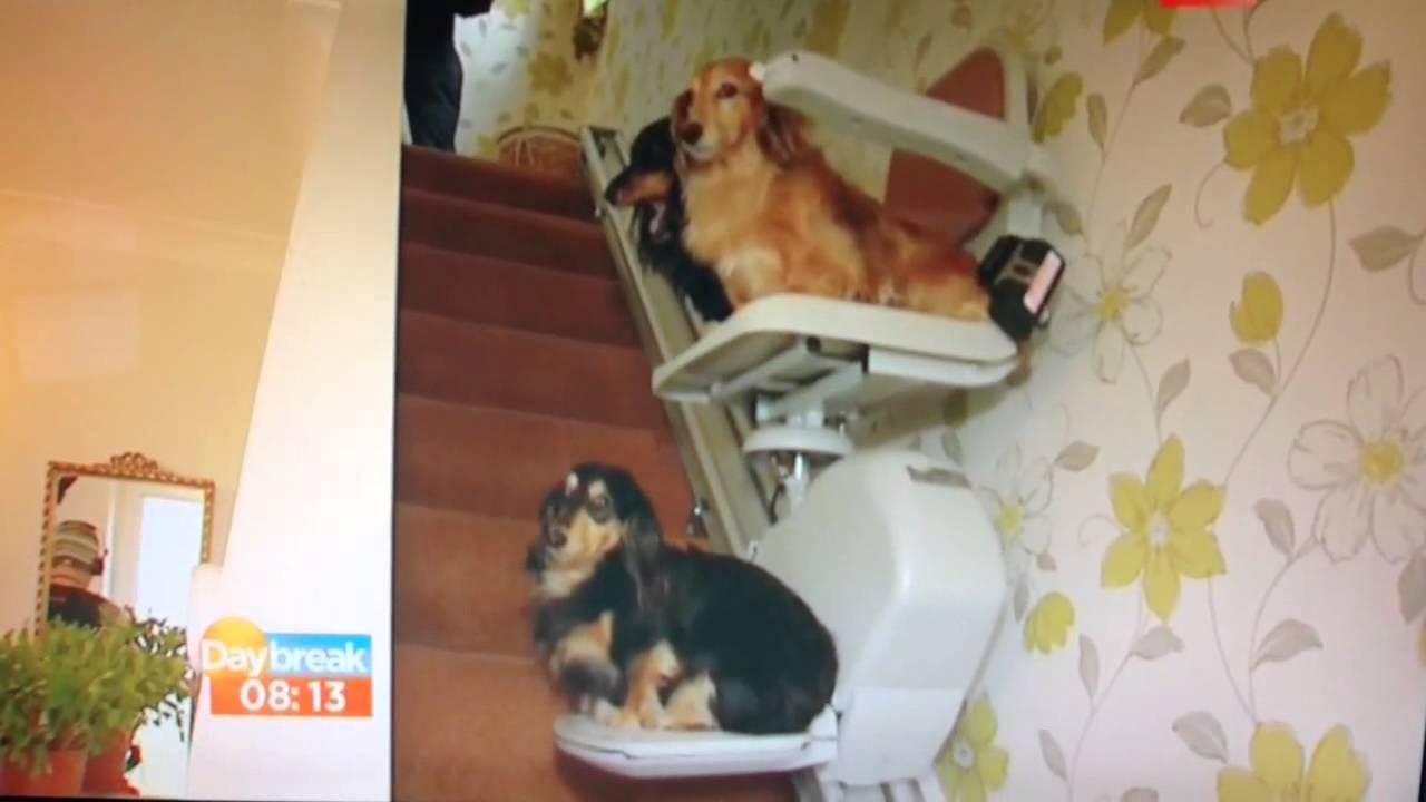 Dogs Dachshunds On Stairlift Daybreak Itv1 Youtube