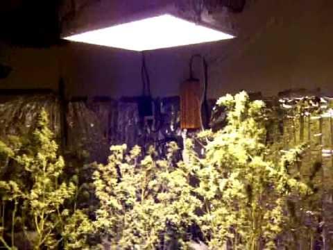 Indoor Grow Room No Bugs Self Heated Youtube