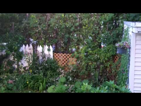 Organic asian garden in America, 07-2017.