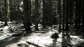 Golden Kanine - Climb