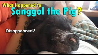 What Happened to SANGGOL THE PIG? | June 12th, 2017 | Vlog #138