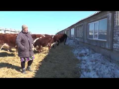 С фермы - в СИЗО
