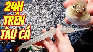 TXT TV | 24h Trên Biển Theo Tàu Đánh Bắt Cá  | Vị Ngọt Bá Đạo Của Hải Sản Khi Vừa Đánh Lưới Lên
