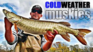 COLD WEATHER MUSKIES 2 Musky Day Fishing for Muskies when it gets COLD in the FALL